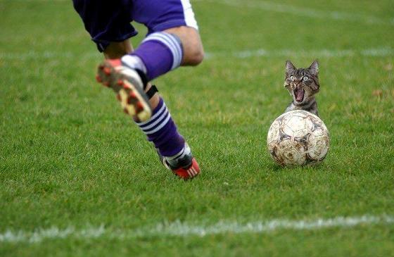 Katzen 48 fussball 4 gefahr 3 tiere 122