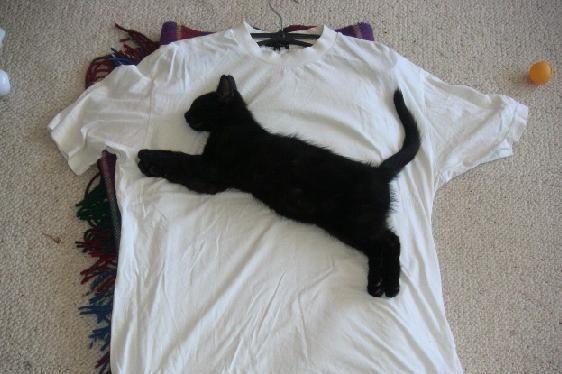 puma katze t shirt